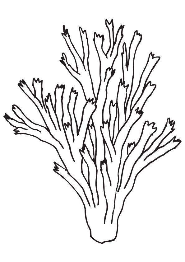 Pillar-Coral
