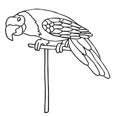 Coloring Pages of Pionus Parrot Printable