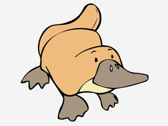 Top 10 Platypus Coloring Pages For Toddlers