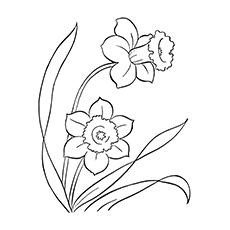 10 Lovely Daffodil Coloring Pages For Your Little One