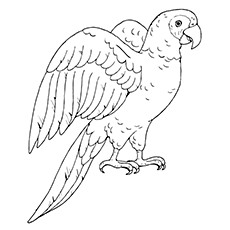 Poicephalus Parrot Picture to Color Free