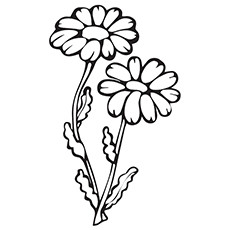 Daisy Coloring Page Coloring Pages