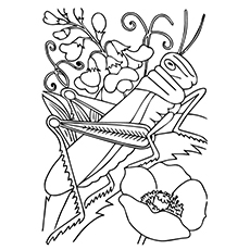 Red-Legged Grasshopper Coloring Page