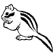 Chipmunk Coloring Pages - Red-Tailed-Chipmunk