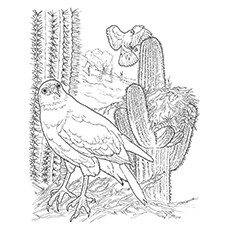 Red-Tailed Hawk Coloring Pages
