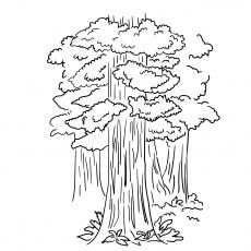 Redwood-Tree-