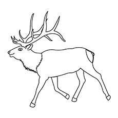 10 Amazing Elk Coloring Pages For Your Toddler