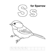 Sparrow Coloring Page - S For Sparrow