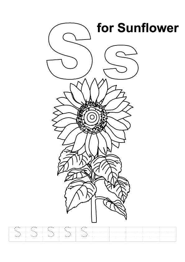 S-For-Sunflower
