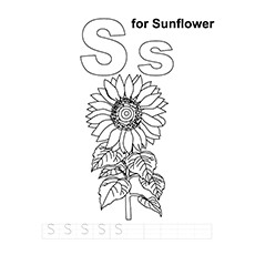 Sunflower Coloring Page - S For Sunflower