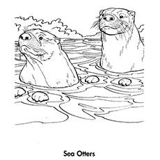 sea otter coloring page - Otter Coloring Pages