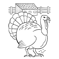 Colouring Sheet of Slate Turkey
