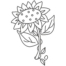 Solara Sunflower Coloring Page