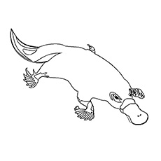 Solitary Platypus Coloring Page