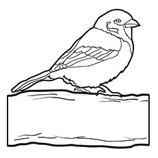 Sparrow Coloring Page