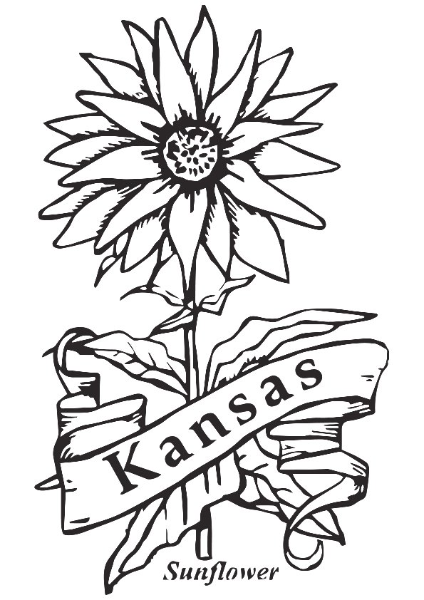 State-Flower-Of-Kansas