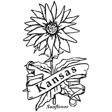 sunflower coloring page state flower of kansas