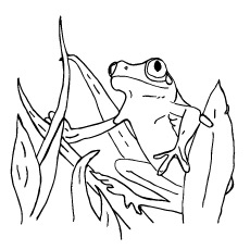 Coloring Page of Surinam Frog