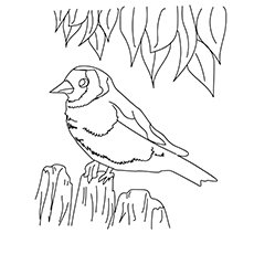 10 Cute Sparrow Coloring Pages For Your Little One