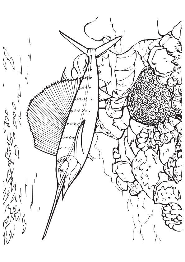 Swordfish-Near-The-Reef