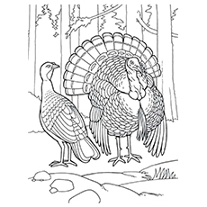 Eastern Wild Printale Coloring Pages of Turkey