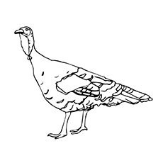Turkey The Rio Grande Coloring Pages