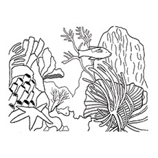 coral reef coloring pages Top 10 Coral Coloring Pages For Toddler coral reef coloring pages