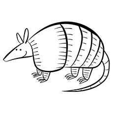Three Banded Armadillo