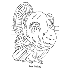 Tom Turkey Coloring Pages