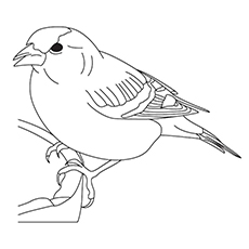 White-Throated Sparrow Coloring Page
