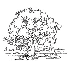 Coloring Pages Of Wild Oak Tree