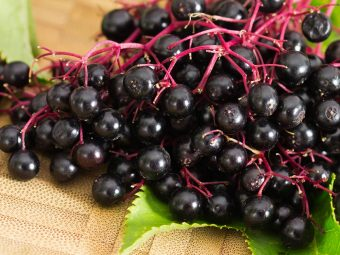 Elderberry In Pregnancy: Safety, Health Benefits And Side Effects