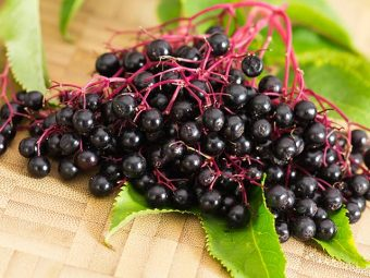 Can You Take Elderberry During Pregnancy?