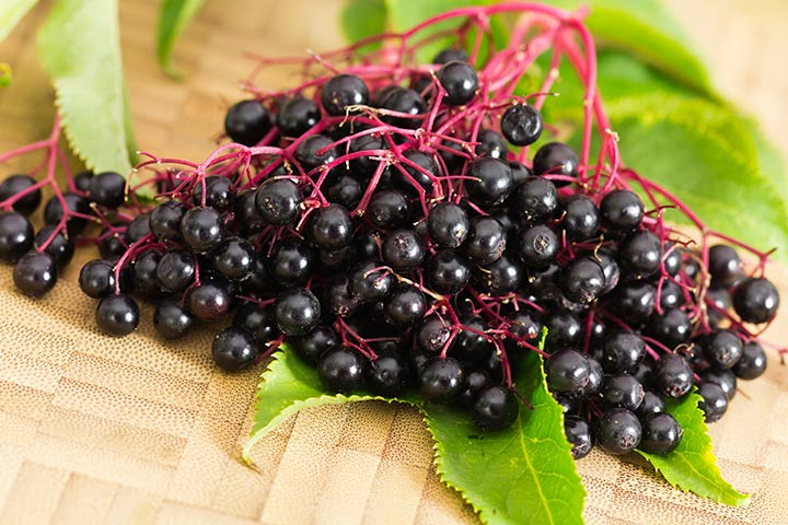 Is Elderberry Safe During Pregnancy