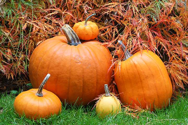 Halloween Games For Toddlers - Find The Pumpkin