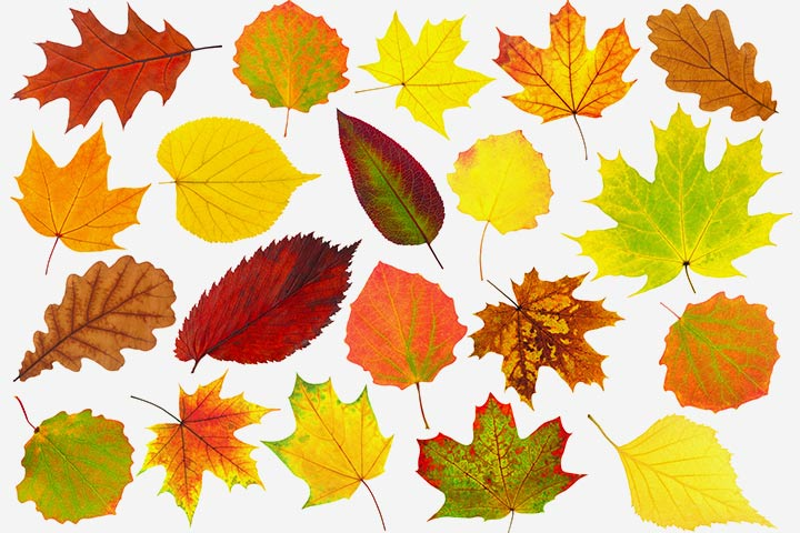 Thanksgiving Activities For Toddlers - Leaf Decoration For The Window