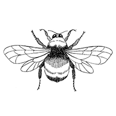 top 15 bumblebee coloring pages for your little one