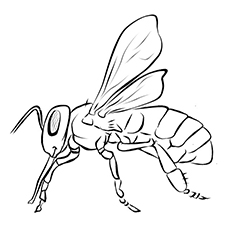 Printable Coloring Page of Rusty Patched Bumblebee