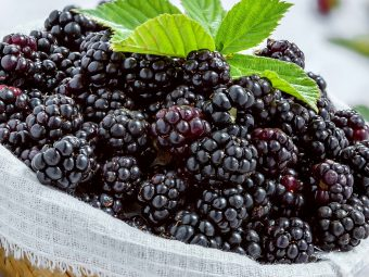 Can You Eat Blackberries While Pregnant?