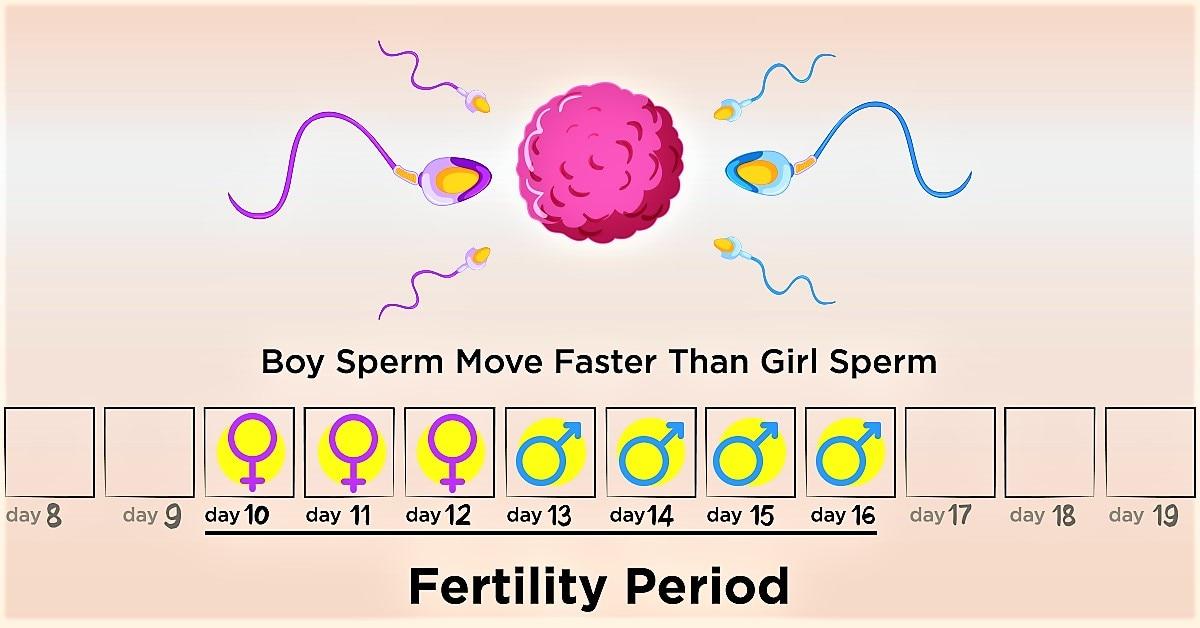 Ovulation Calculator | Fertility Calendar - Know Your Fertile Days