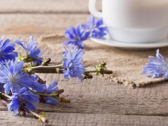 Is It Safe To Eat Chicory During Pregnancy?