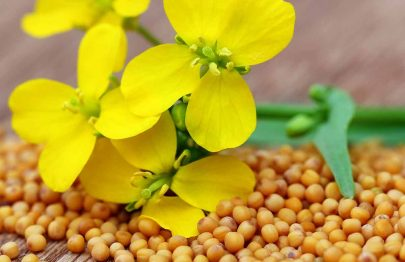 Is It Safe To Eat Mustard During Pregnancy?