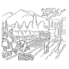 harvest coloring pages old method of harvesting
