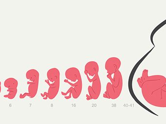 Pregnancy Week By Week - Symptoms, Baby Development, Tips And Body Changes