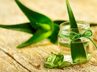 12 Interesting Facts About Aloe Vera For Kids
