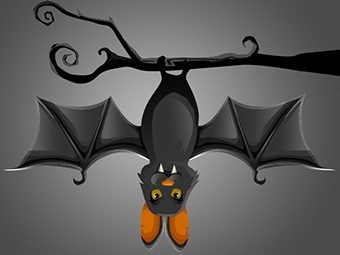 14 Important Facts About Bats For Kids