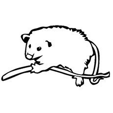 Brown-Eared Woolly Opossum Coloring Pages