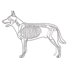 Dog Skeleton Coloring PagesSkeletonPrintable Coloring Pages Free