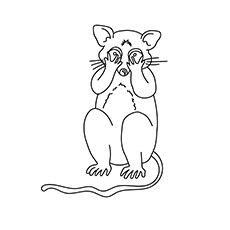 Don't Play Possum