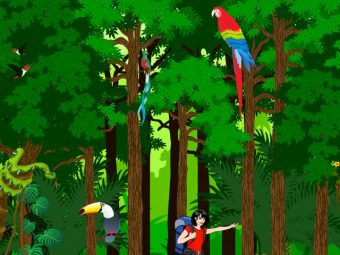 19 Must Know Facts About Rainforest For Kids